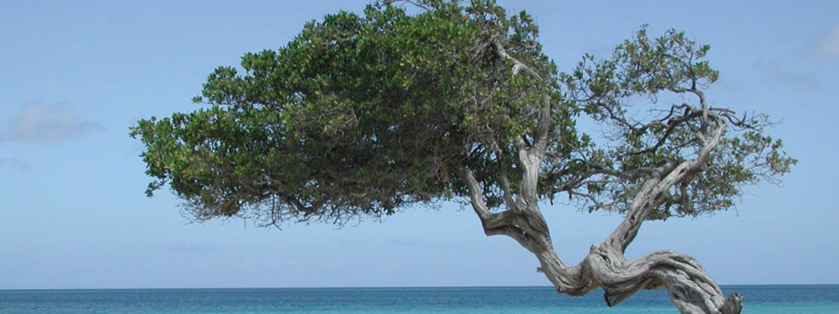 Sardegna in plein air