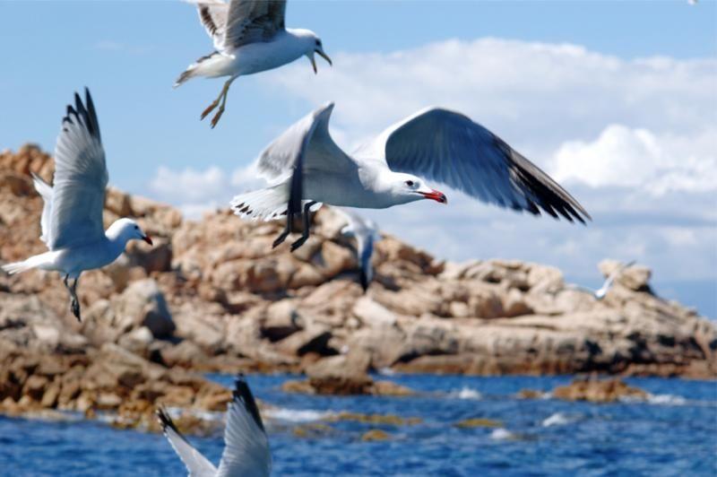 Parco Nazionale Arcipelago della Maddalena