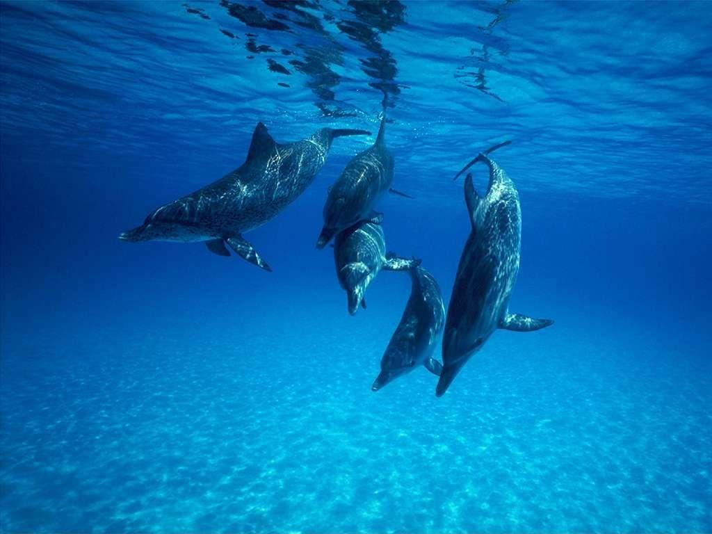 in immersione - delfini a Tavolara