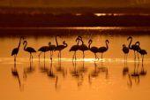 laguna di San Teodoro al tramonto