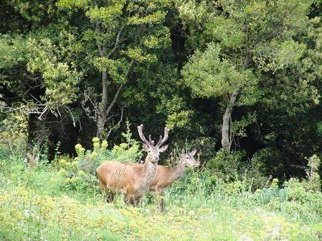 Cervo Sardo sul Monte Nieddu